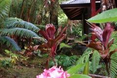 volcano-mist-cottage-guest-gallery-big-island-hawaii-8