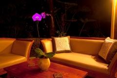 lanai_orchid